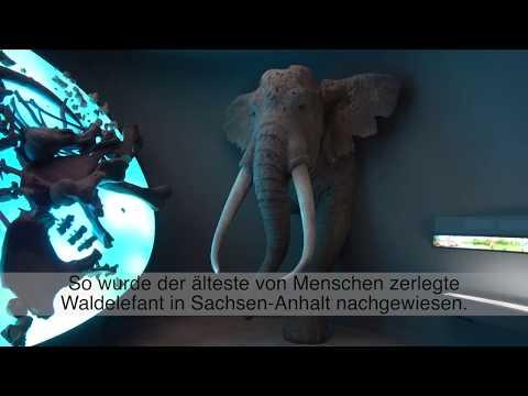 Archäologische Funde in Sachsen-Anhalt