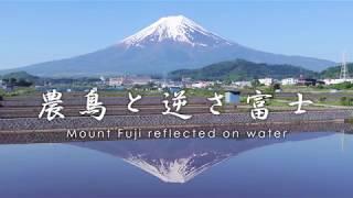 FUJISAN FILM FES.2018 グランプリ受賞!