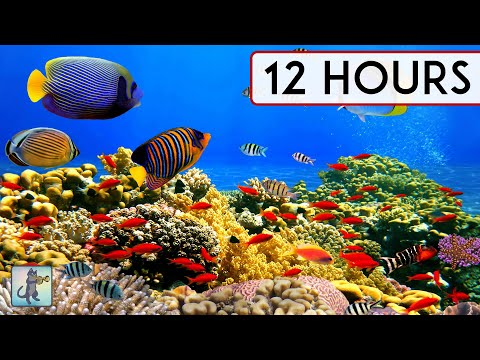 CORAL REEF AQUARIUM COLLECTION • 12 HOURS • BEST RELAX MUSIC • SLEEP MUSIC • 1080p HD #2