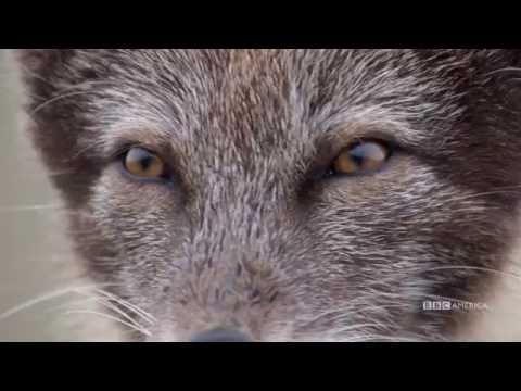 The Hunt - EP 2 TRAILER - Sundays at 9|8c on BBC AMERICA