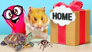 Video How to Build Cool Homes for Hamster, Spider or Turtle MP3, 3GP, MP4, WEBM, AVI, FLV Agustus 2019