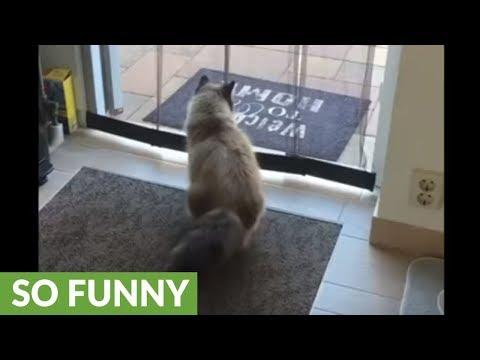 il-gatto-che-esce-di-casa-saltando