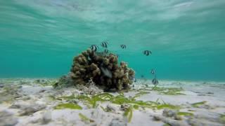 Million Fish GoPro  Snorkel