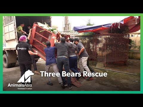 #ThreeBearsRescue - James, Bân and Alice come home