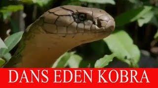 DANS EDEN YILAN - MUŞ'LU KOBRA (2018 yeni kısa komik video) komik whatsapp durum videoları izle