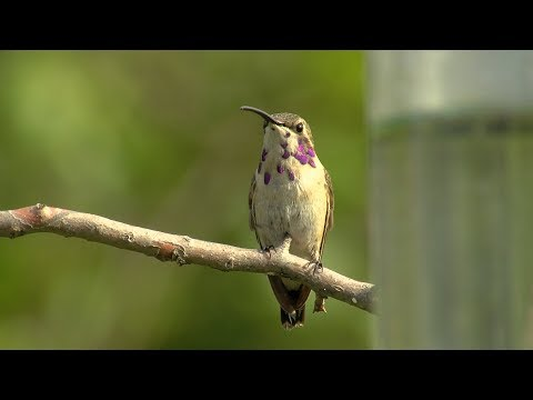 Wetlands For Birds - Texas Parks & Wildlife [Official]
