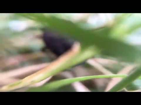 Shaker _39 (видео)
