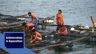 Antimicrobials in Aquaculture