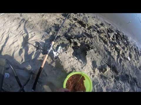 ловля сазана на оби на видео