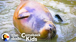 Tiny Lost Seal Grows Up To Be Blubbery And Hilarious | The Dodo Comeback Kids by The Dodo