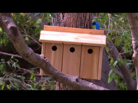 Environment: Bird nesting boxes in the gardens of the Principality