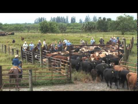 Florida Crackers: The Cattlemen And Cowboys of Florida