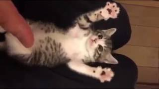 Funny Cat Videos Surprised Baby Kittens Compilation 2016.Cute kittens doing funny things will always going to cheer you up.