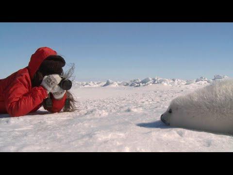 Seal-Watching Package