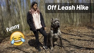 Off Leash Hiking! Living with a Cane Corso