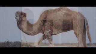 Balti - Fel Barima (Layam Kif Erih) - YouTube