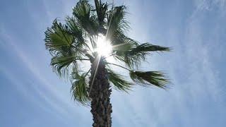 Райский сад: житель Бишкека выращивает пальмы