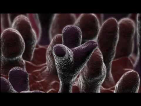 A National Geographic Film on the Spread of the Flu Virus
