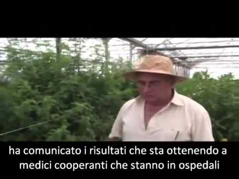 artemisia, la pianta che fa paura alle case farmaceutiche!