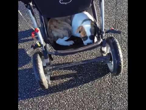 Koiralla iski väsy kesken lenkin