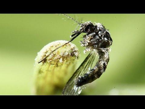 Λήξη συναγερμού για τον ιό Ζίκα ανακοίνωσε ο ΠΟΥ