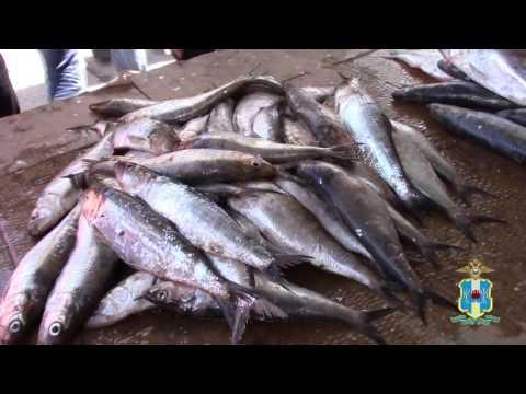 Об изъятии из реализации более ста килограммов рыбы и рыбпродукции в рамках операции «Путина» в Ростове-на-Дону