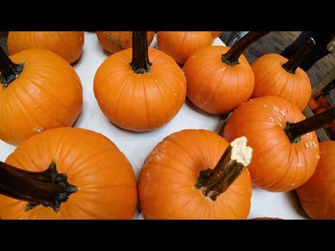Video thumbnail: Pumpkin picking
