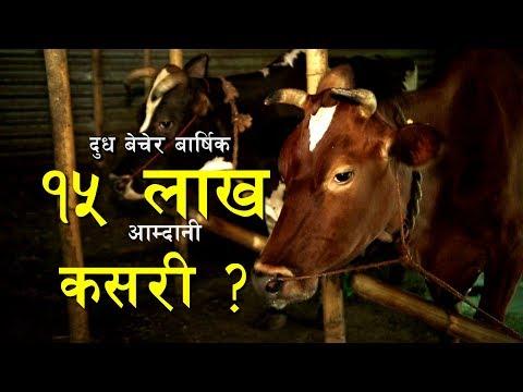 (Nepali  Domestic Agriculture पसुपालन नेपाली युवाहाँरुको रोजाइको  रोजगारी - Duration: 13 minutes.)