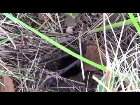 выращивание белых грибов на даче и в огороде видео