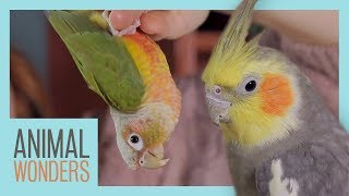 Parrot Parts | What's Normal, What's Not? by Animal Wonders
