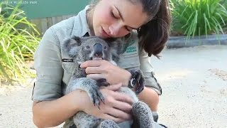 Koala Loves Cuddling and Hugging | Koala Funny and Cute Compilation