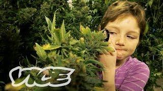 Marijuana Minors