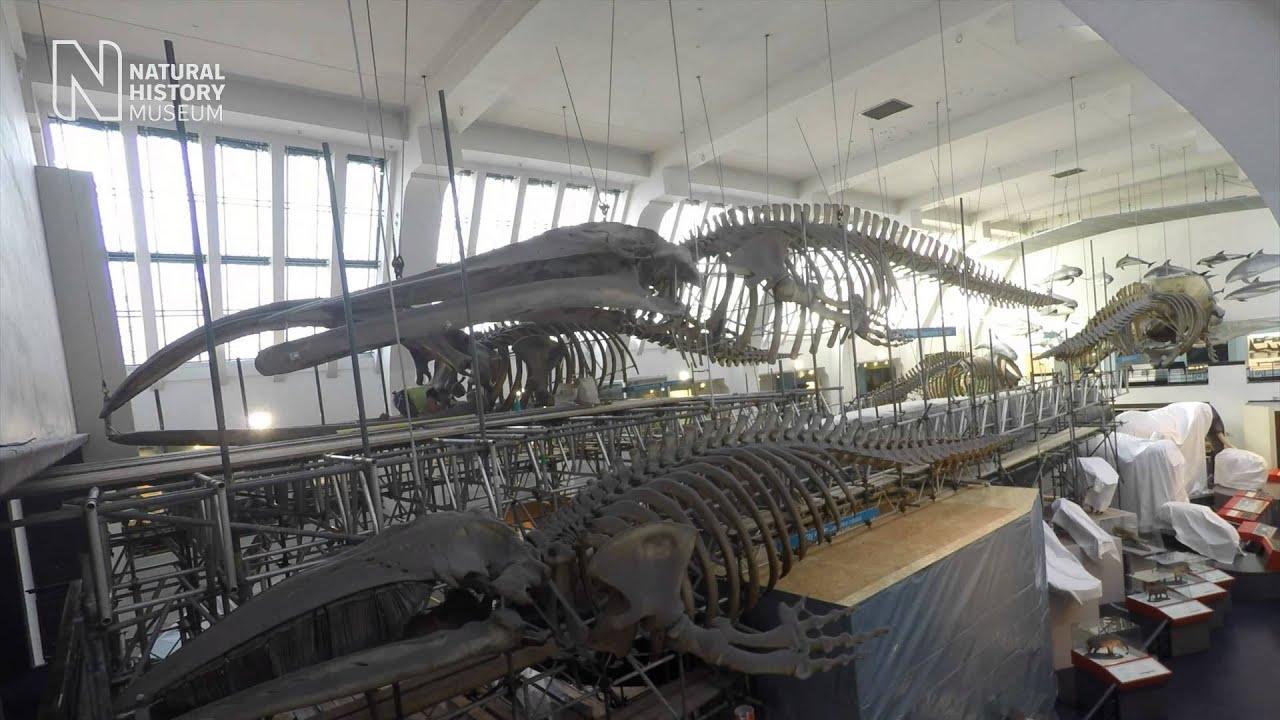 Natural History Museum Shop Dinosaurs