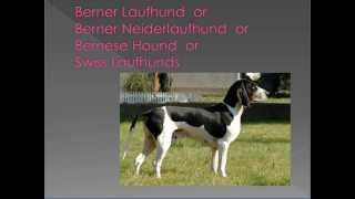 dog breed names cross-reference part 2 - B