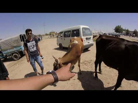 Qashqadaryo somon pres beda pres narxlari онлайн видео