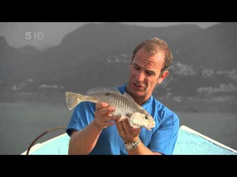 экстремальная рыбалка с робсоном торрент