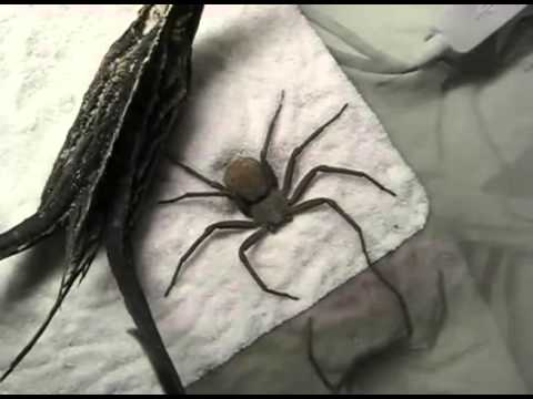 fear of spiders - This video was made by EdisProduction - http://www.youtube.com/user/EdisProduction.