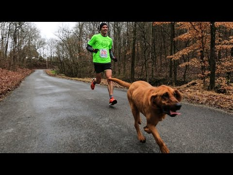 Dog Goes Out for One thing Winds Up in a Marathon