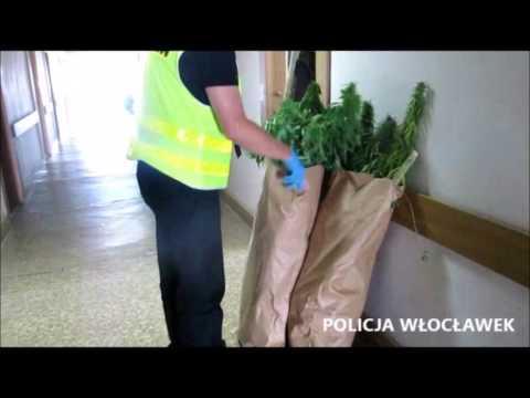 """Włocławek:  """"Amfa i maryśka"""" w rękach policji"""
