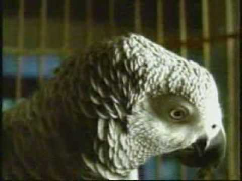 BUD LIGHT TALKING PARROTS (SUPER BOWL PREVIEW 2008)