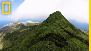 In the middle of the Atlantic, the tallest peak of a small volcanic island is covered in lush greenery, by design. When scientists talk ...