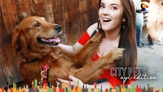 Dog Just Wants To Hug Everyone In NYC - LOUBOUTINA | The Dodo City Pets by The Dodo