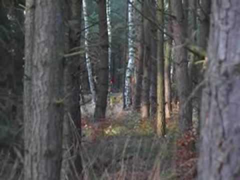 Tak w wielkim skrócie wyglądało polowanie Koła Łowieckiego 'Szarak' w Puszczy Goleniowskiej. Polowanie Hubertowskie zaczęło się o 8 rano, a skończyło o 15.30