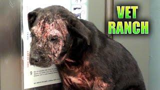 皮膚炎のせいで殺処分が決まっていた野良犬、生まれ変わった姿に感動