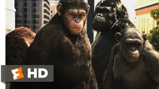 Nonton Rise of the Planet of the Apes (2011) - Attack on San Francisco Scene (3/5) | Movieclips Film Subtitle Indonesia Streaming Movie Download