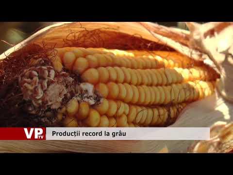 Producții record la grâu