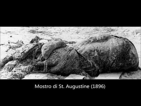 i più strani ritrovamenti animali dal 1986