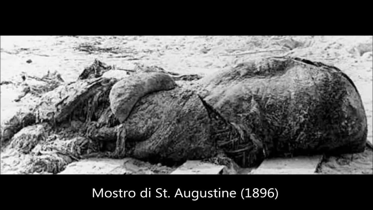 I più misteriosi ritrovamenti di creature dal 1896 ad oggi
