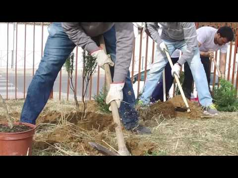 "Campaña ""Un millón de árboles"". 1ª arbolada 2016 en Antequera"