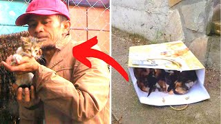 People All Over The World Are Helping This Guy Rescue abandoned kittens by Did You Know Animals?